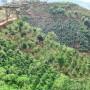 Canh tác Nông lâm kết hợp bền vững trên đất dốc - tài liệu tập huấn KN