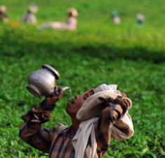 Hồ tiêu chết hàng loạt, nông dân lao đao