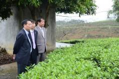 Đồng chí Chu Ngọc Anh, Chủ tịch UBND Phú Thọ thăm viện KHKT nông lâm nghiệm miền núi phía Bắc
