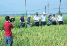 Kết quả nghiên cứu và chọn tạo giống lúa PB53