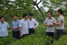 Đồng chí Bùi Văn Quang, Phó Bí thư tỉnh ủy, Chủ tịch UBND tỉnh Phú Thọ làm việc với Viện