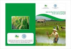 Tài liệu kỹ thuật: Quản lý tổng hợp cây lúa (RICM) và Sản xuất lúa giống