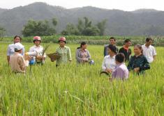 Quy trình sản xuất lúa cải tiến cho vùng miền núi phía Bắc