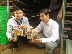Tiềm năng phát triển sản xuất nấm hương tại Sapa