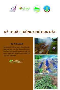 Kỹ thuật trồng chè hun đất