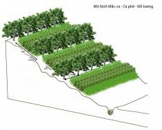 Hướng dẫn thực hành nông lâm kết hợp cho trung du, miền núi phía Bắc (phần 1)